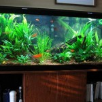 Fish Tank Decoration Ideas