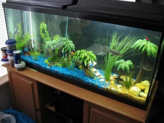 Fish tank decoration ideas for living room interior for Aquarium decoration ideas cheap